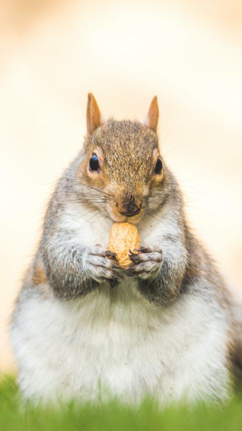 木の実を食べるリス