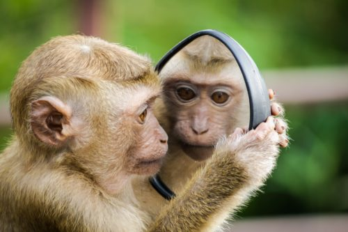 鏡を見る猿