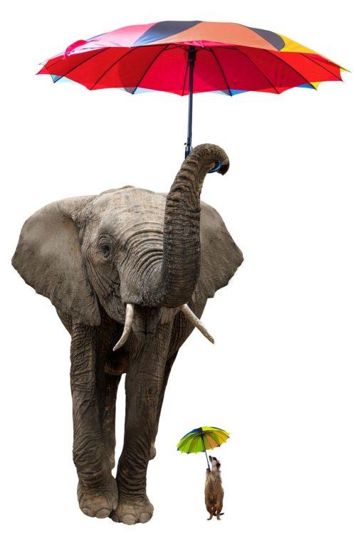 日傘をさす動物